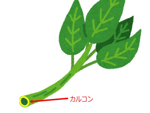 明日葉の茎にあるカルコン