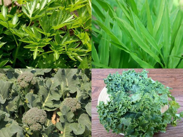 大麦若葉、明日葉、ブロッコリー、ケール