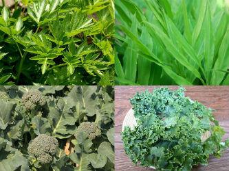 ブロッコリー、大麦若葉、明日葉などの野菜